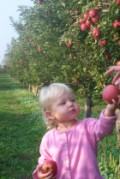 Ella picking apples
