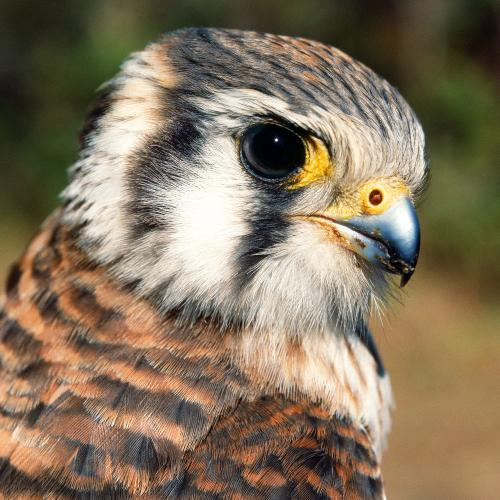 Birds Of Prey Meet And Greet At The New York State Museum Kids Out And About Albany