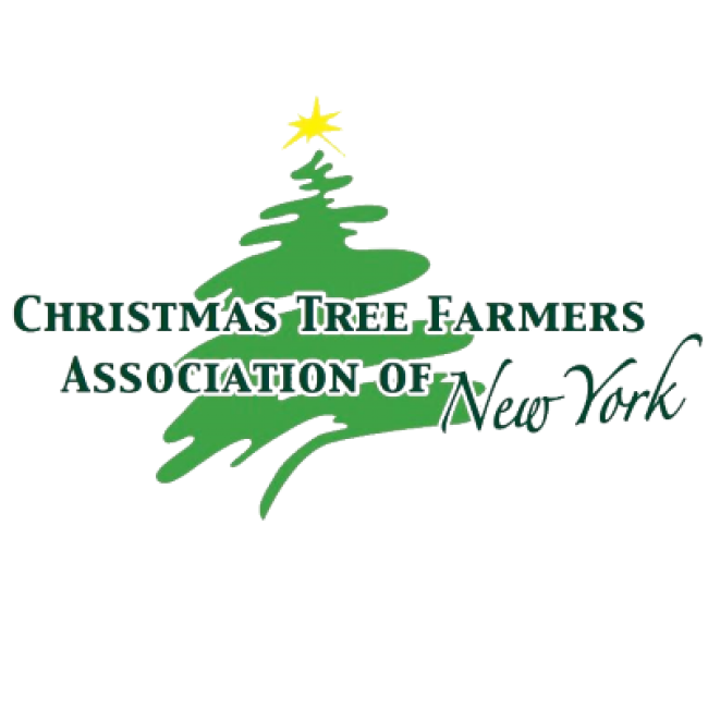Visit Website - Christmas Tree Farms In The Albany, NY Area Kids Out And About Albany